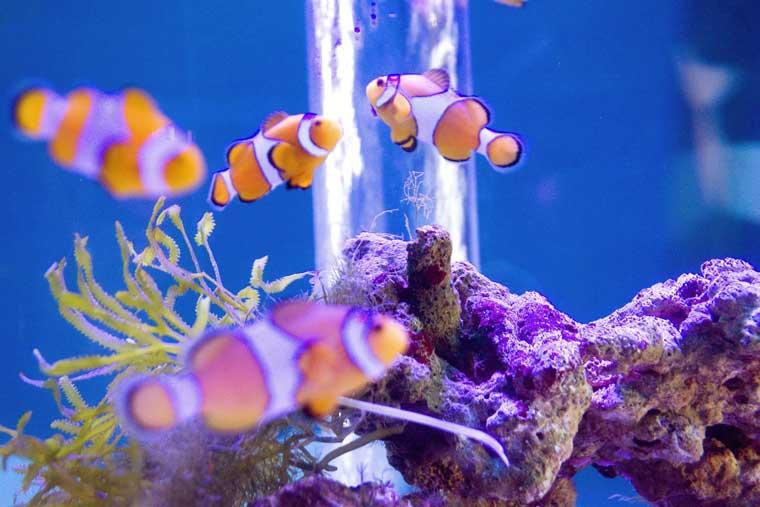 きれいな水槽 魚